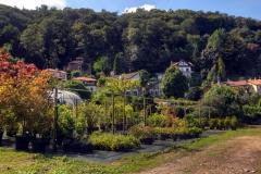 Carciano_Borgo13